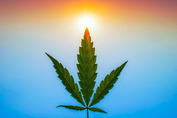 A marijuana leaf facing up with a hazy blue and orange background resembling a blue sky or ocean and a sunset or sunrise.