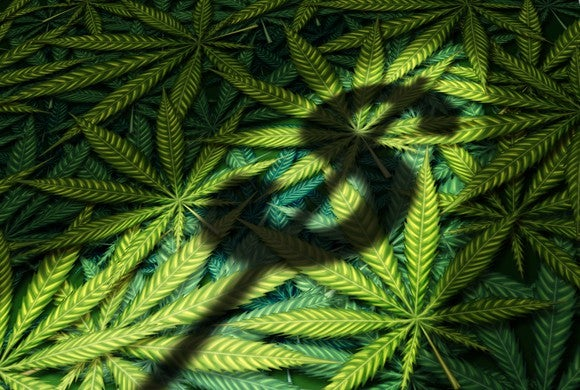 A dollar sign shadow cast on a large pile of cannabis leaves.