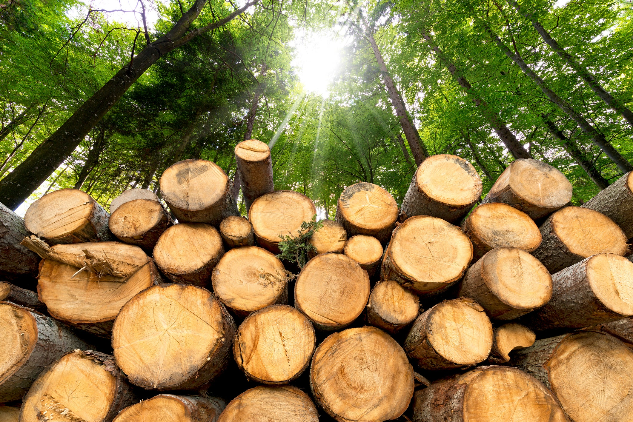 3 Top Lumber Stocks to Consider Buying in 2019 | The Motley Fool