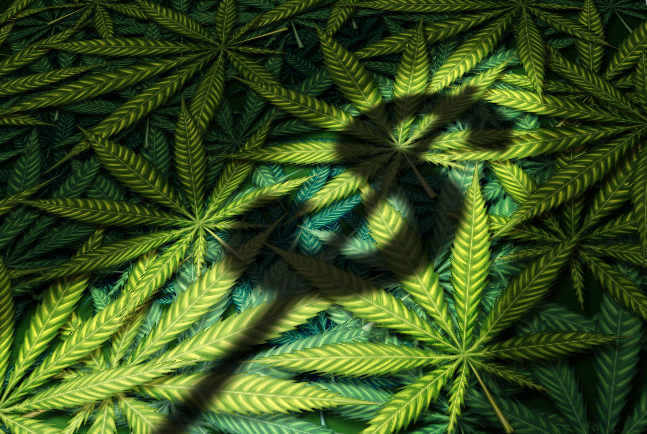Better Marijuana Stock: HEXO vs  The Green Organic Dutchman