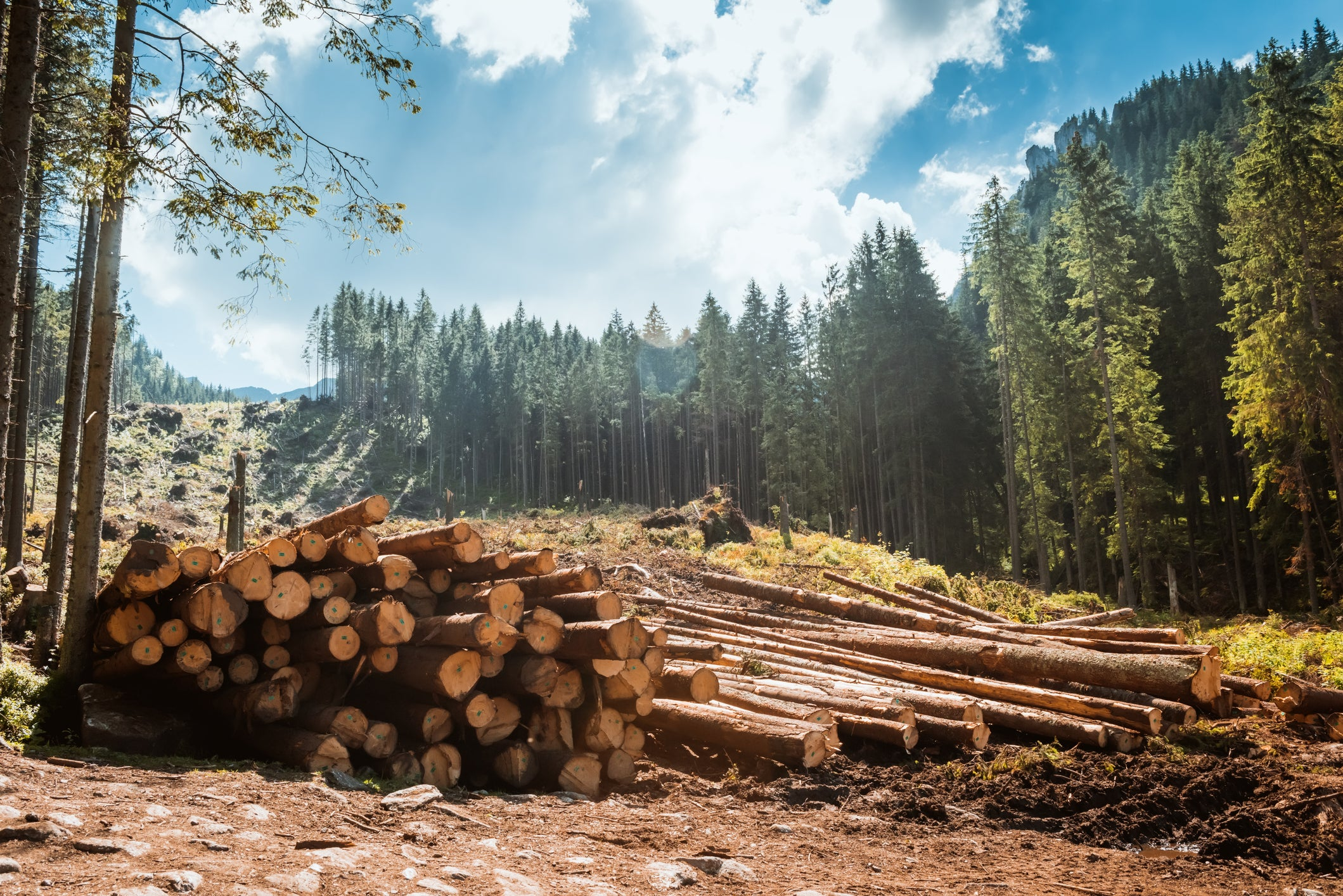 Why Weyerhaeuser Shares Fell 14 9% in May -- The Motley Fool
