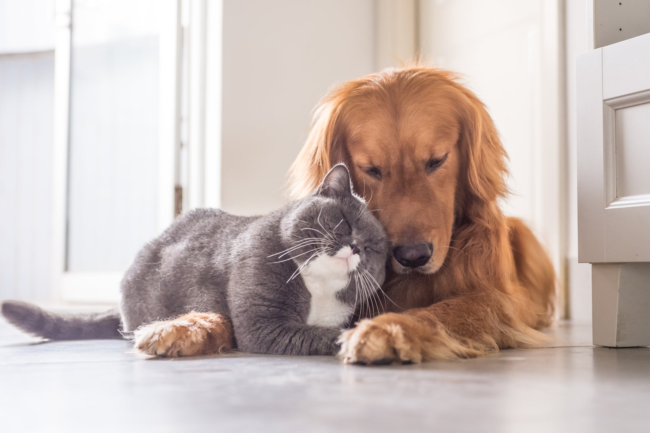 A cat and a dog nuzzling each other