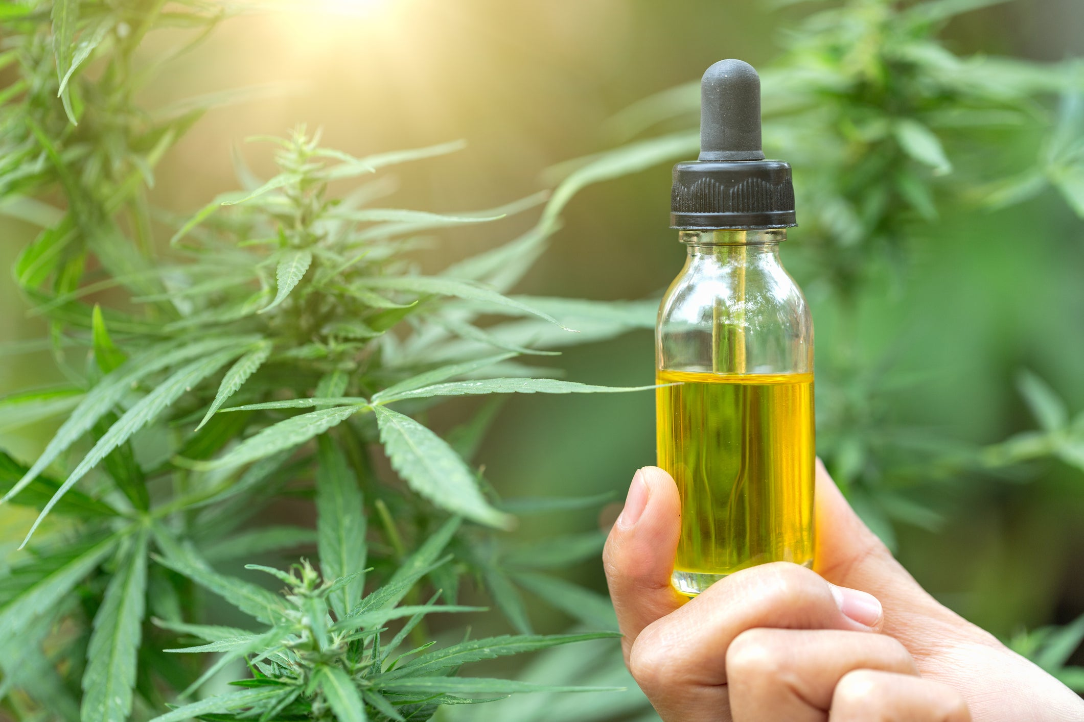 More About What Are The Health Benefits Of Cbd Oil?