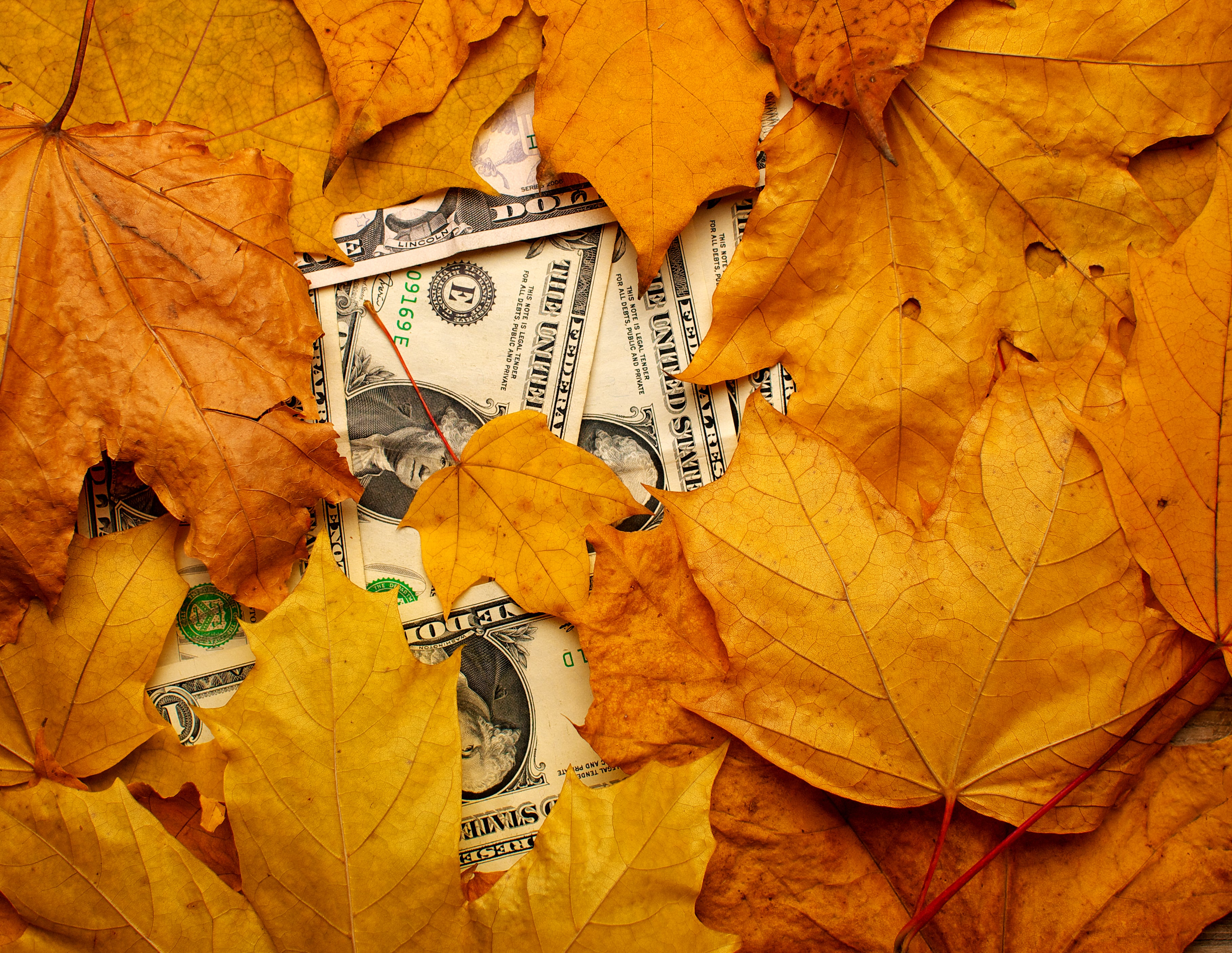 Fall leaves with dollars hiding under them