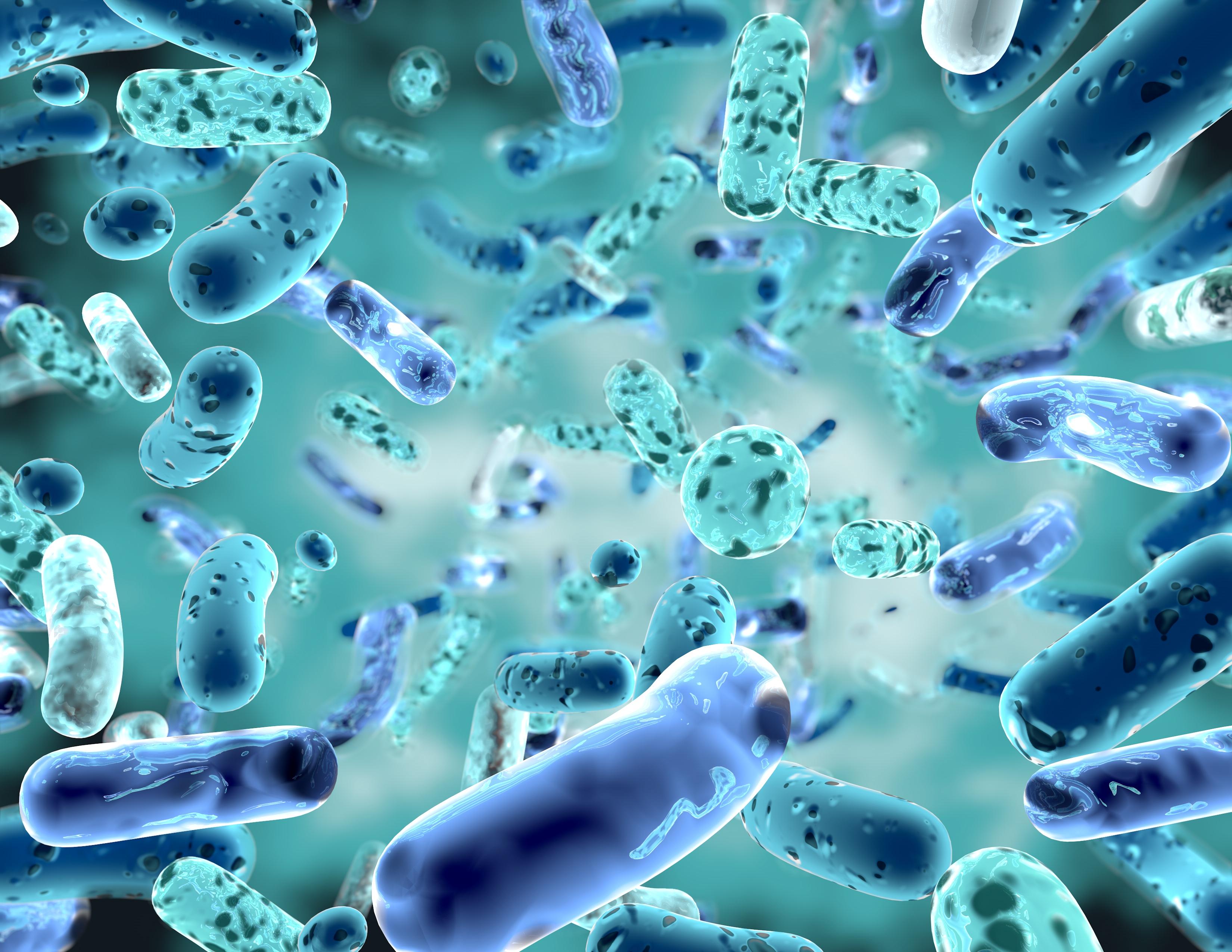 пробиотики бактерии
