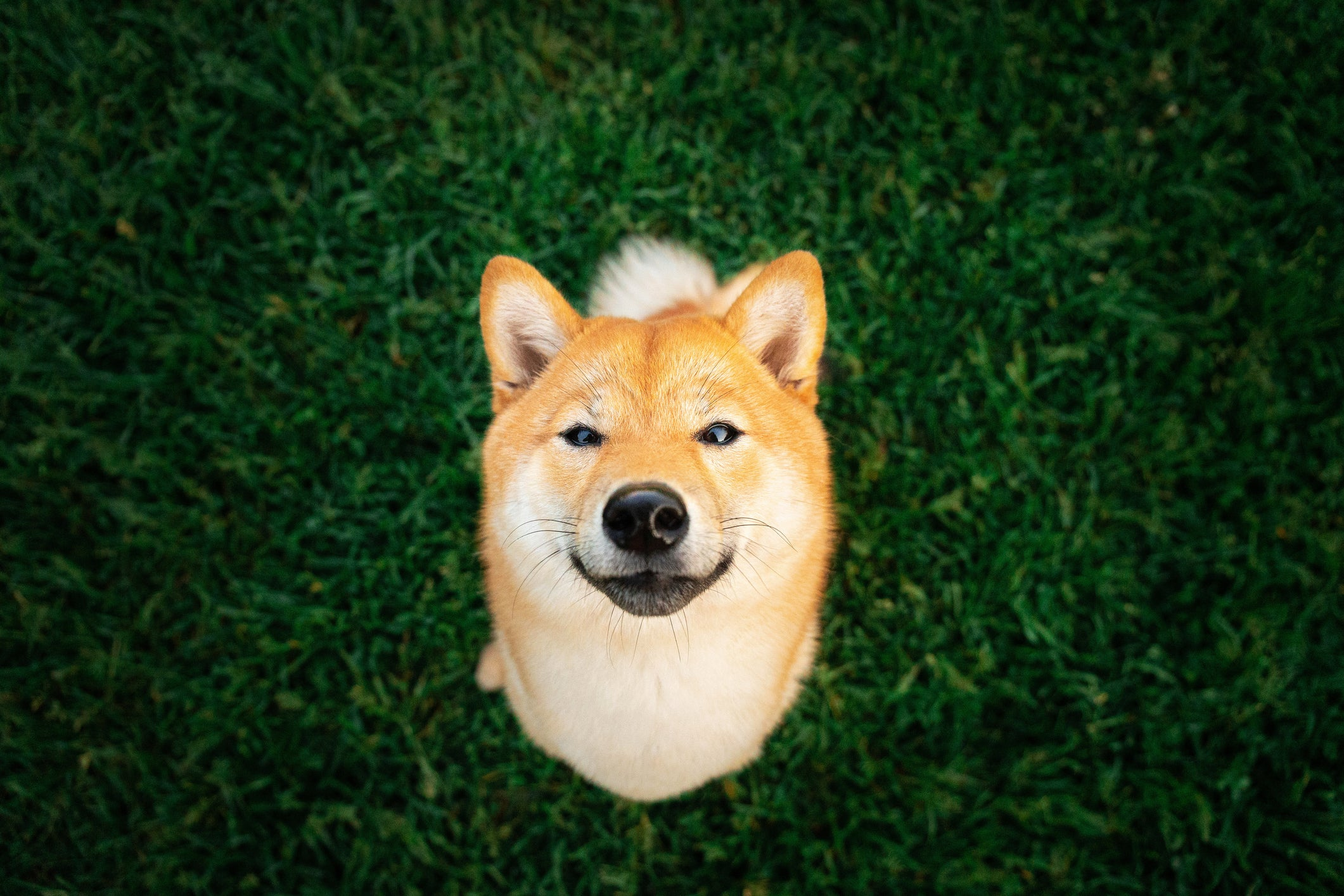 Dogecoin Has No Competitive Advantages -- but These Stocks Do