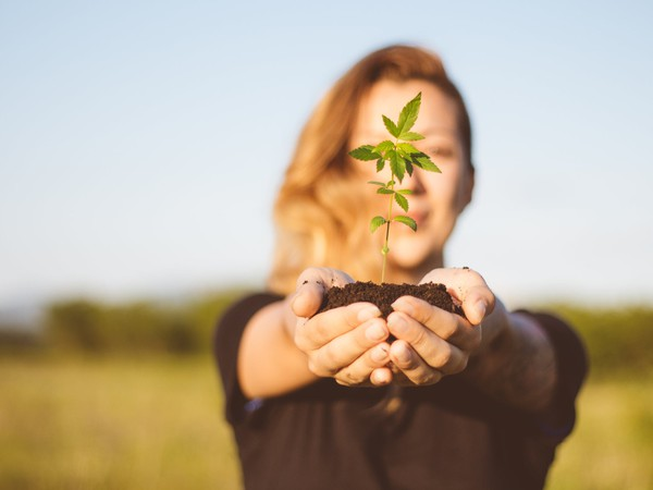 Marijuana plant held by young woman