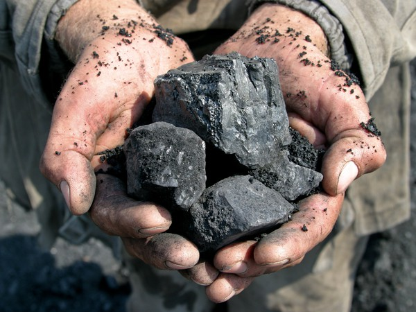 Pieces of coal in the hands of a miner.