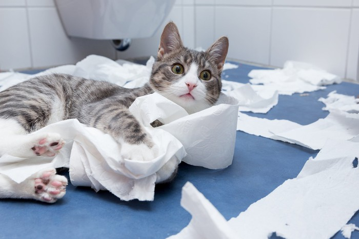 Gray and white tabby cat rolling in toilet paper on a bathroom floor