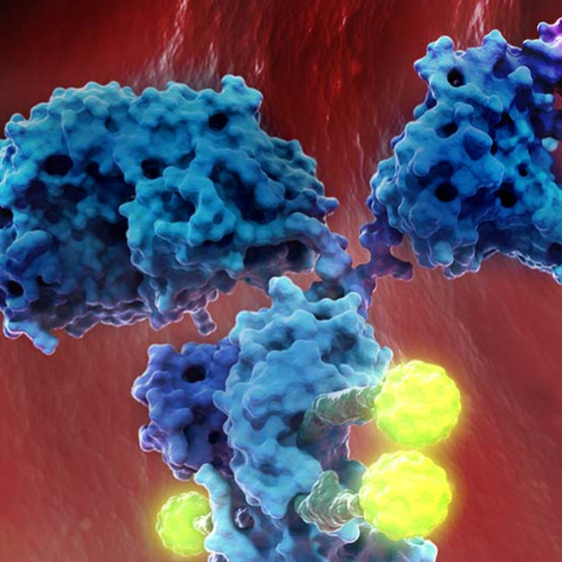 Antibody-drug conjugate