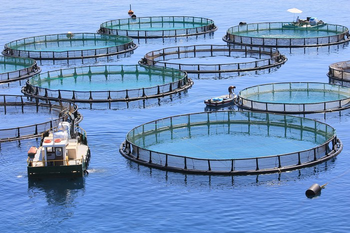 Fish farmers check their large, circular nets in the ocean