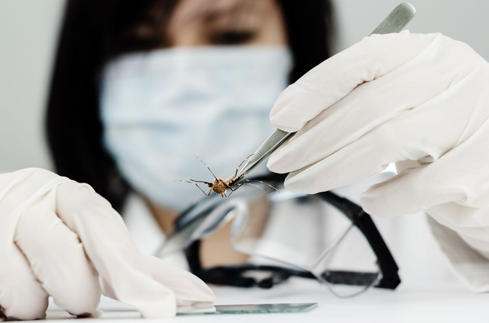 A scientist with a mask uses tweezers to hold a mosquito
