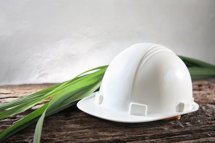 Green plant fronds lie next to a white hard hat