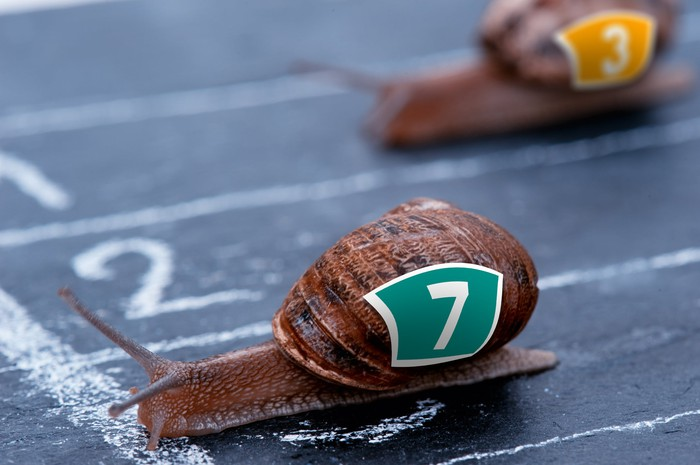 Snails racing each other to a finish line.