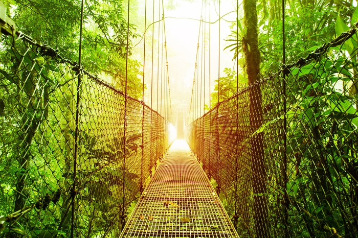 Picture of narrow bridge over a jungle.
