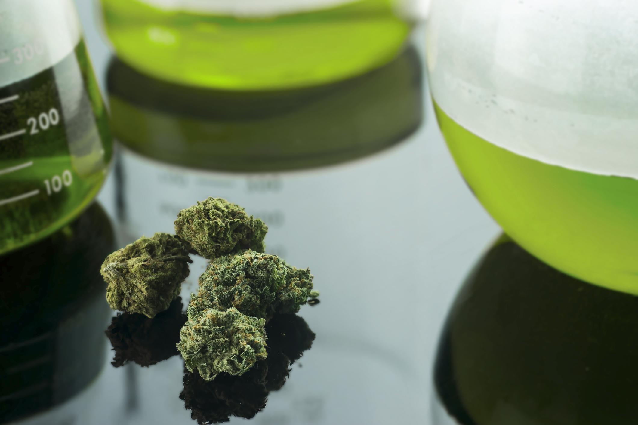 Marijuana on lab table