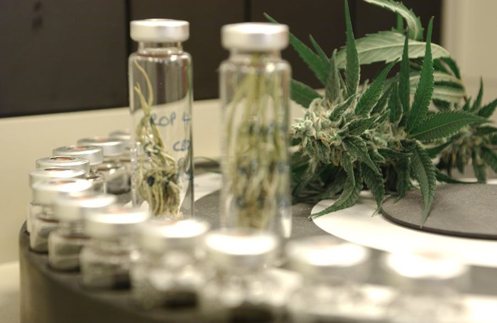 A marijuana leaf surrounded by lab vials and equipment.