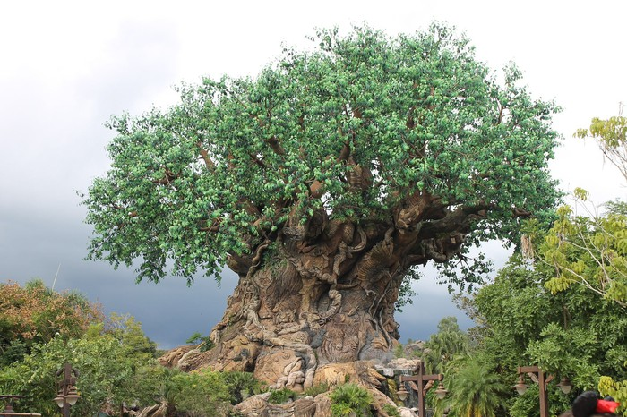 The Tree of Life at the center of Disney's Animal Kingdom.