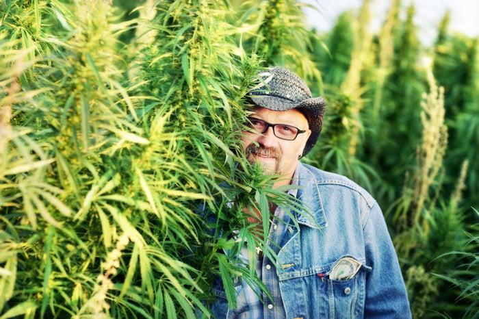 A marijuana grower posing next to his crop.