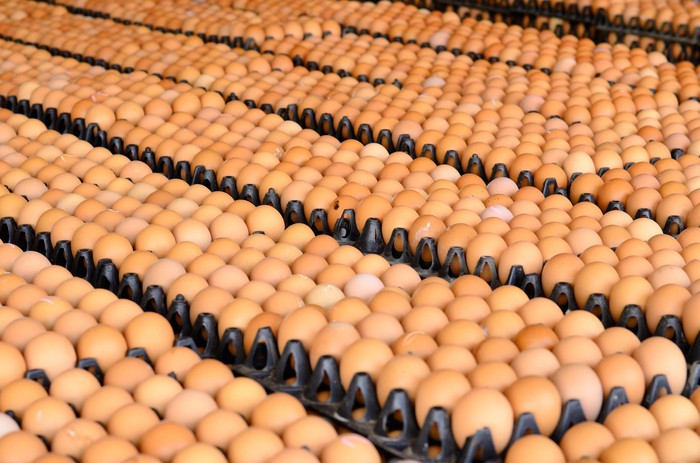Dozens and dozens of eggs in plastic trays at a factory.
