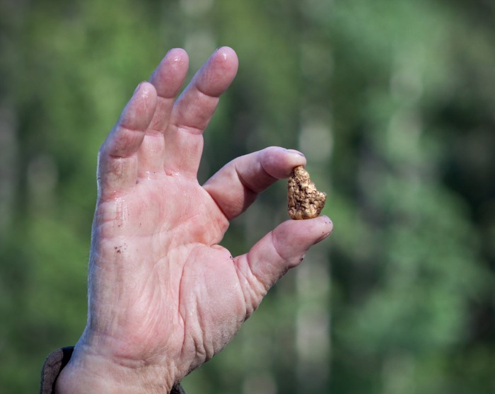A gold nugget is held between a thumb and forefinger.