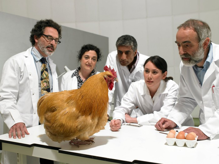 Scientists looking at a chicken in a lab