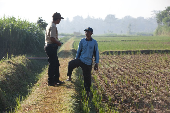 Tobacco workers in a field.