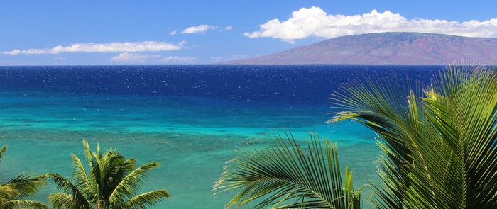 The ocean with palm trees in the foreground