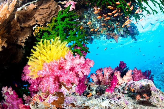 Colorful coral reef and fish.