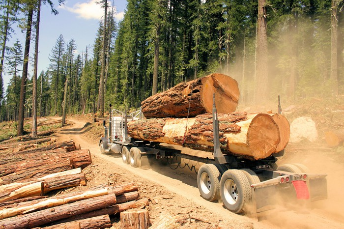 Logging truck hauling old growth timber in Pacific Northwest.