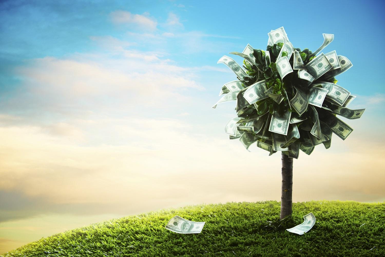 "A ""money tree"""