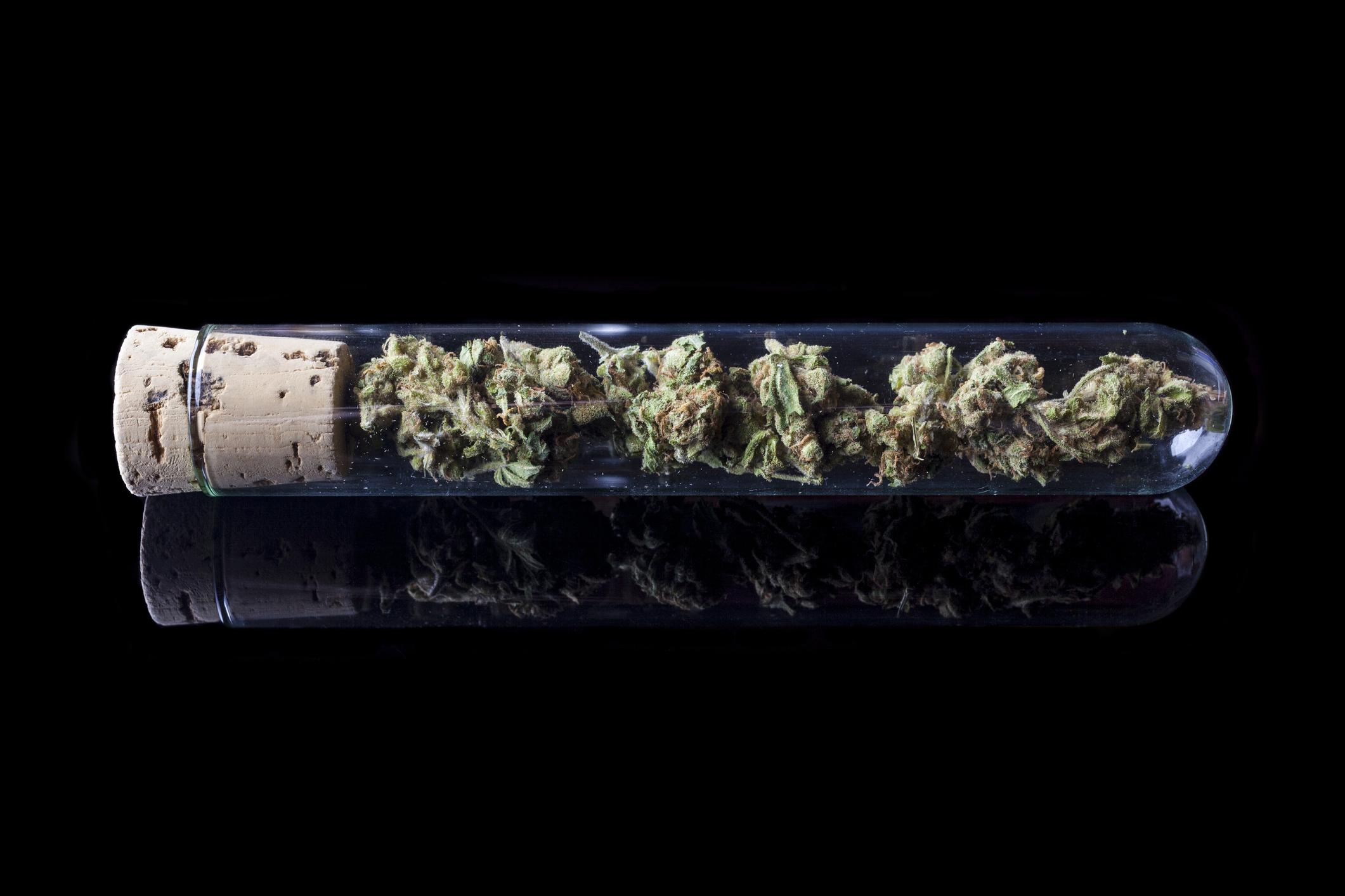 marijuana in a test tube