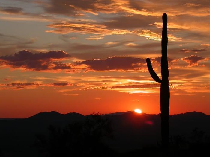 A cactus growing in the Arizonan desert at sunset.
