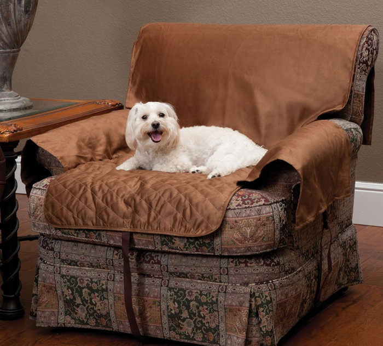 Dog lying on cushion.