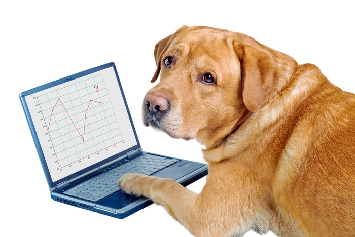 A dog with its paw on a computer.