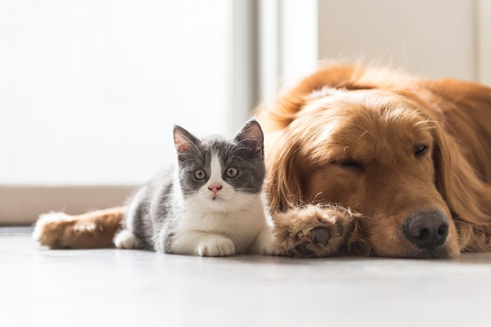 A cat and a dog lying next to each other.