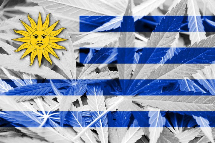 Uruguay flag overlaid on marijuana background