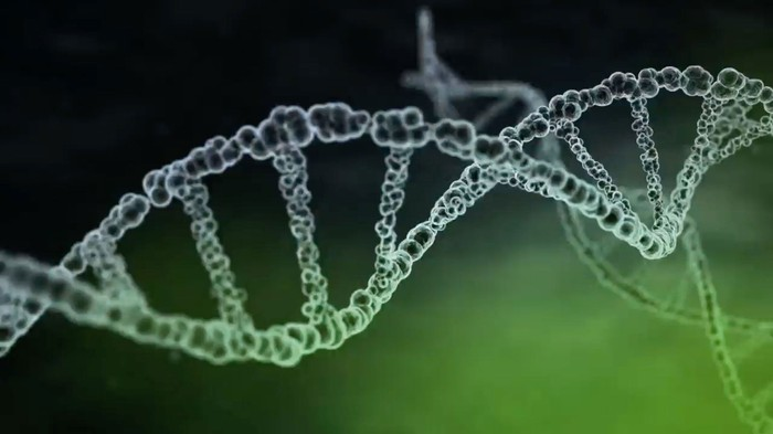 DNA strand like the one AVXS-101 injects into nerve cells.