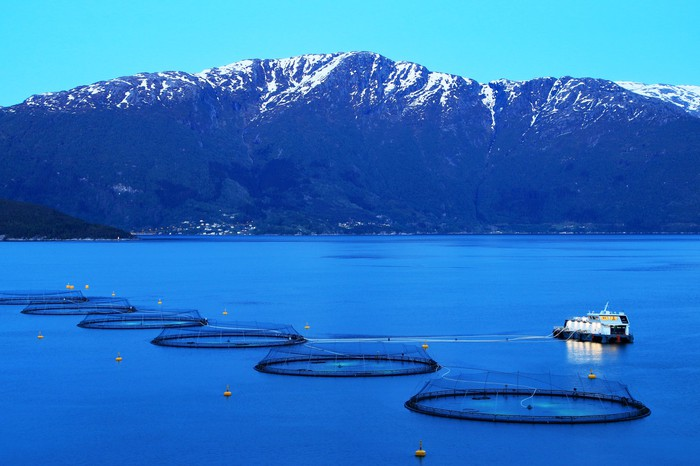 A boat sails past a fish farm, with a snow-capped mountain in the background.