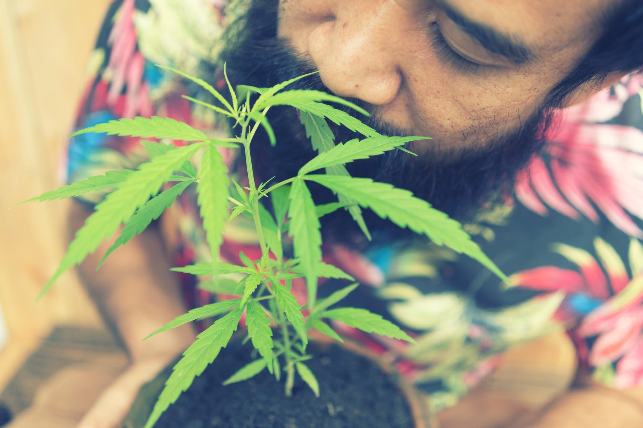 A cannabis user holding a homegrown pot plant.