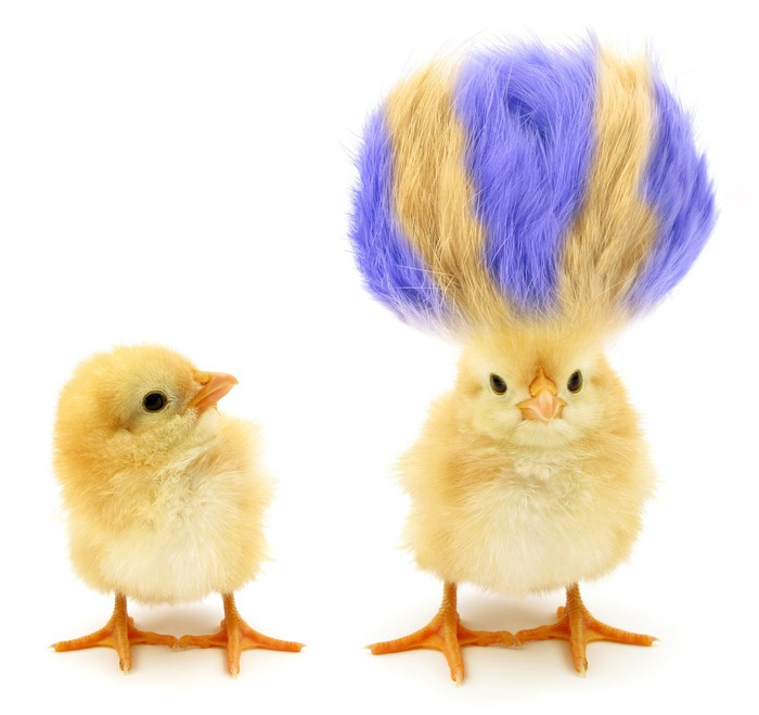 Two chicks, one with purple hair