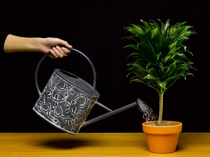 Watering a plant.