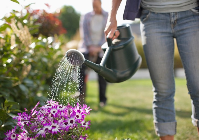 A woman tips a watering can to water a patch of purple flowers.