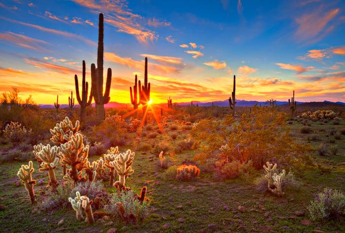 Sun is setting beetwen Saguaros, in Sonoran Desert, near Phoenix.