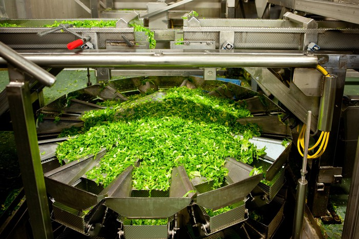 Industrial food-processing line with leafy green vegetables
