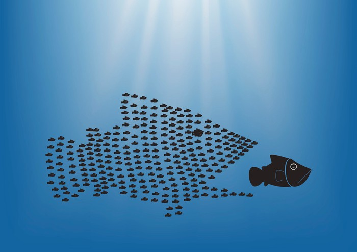 A school of small fish in the shape of a large fish, appearing to swallow up an unsuspecting medium sized fish.