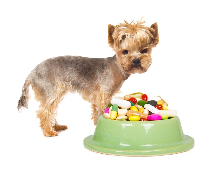 Small dog standing behind a dog bowl full pills.