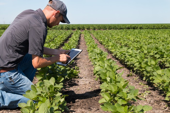Man kneeling down next to crops holding a tablet.