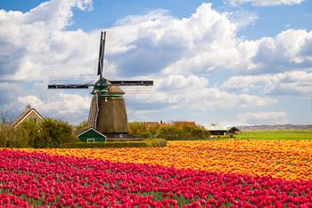 248 holland bioeconomy