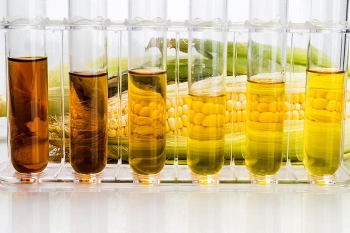 A series of six test tubes with varying levels of orange-to-yellow liquid in them. A corn cob is behind them.